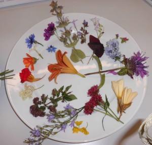 vhs Kurs Blüten auf dem Teller