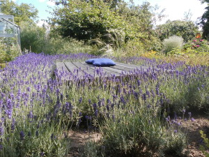 Ruheplatz im Lavendelbeet