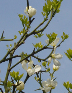 im Frühjahr